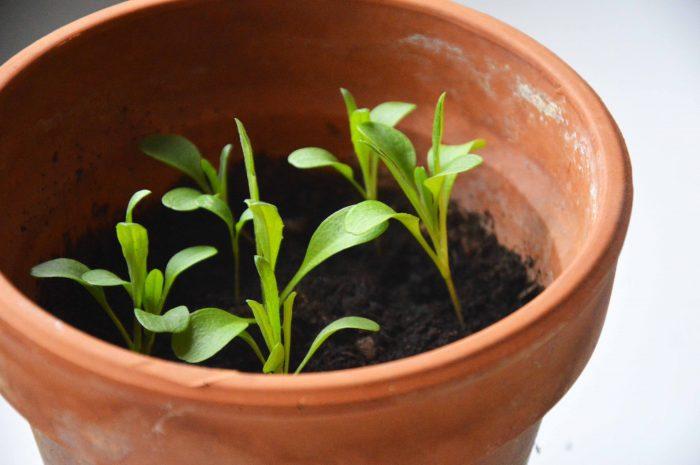 Box-a-planter